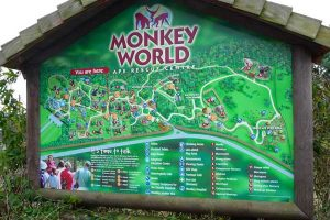 monkey-world