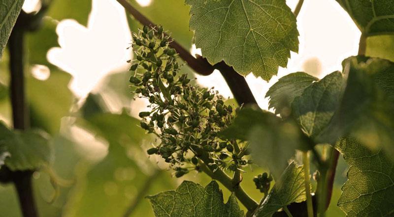 langham-wine3