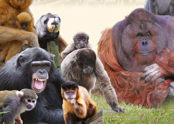 Monkey-World1